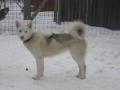 2011-februar-bifrost-2